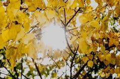 Ήλιος και φύλλα στοκ εικόνα με δικαίωμα ελεύθερης χρήσης