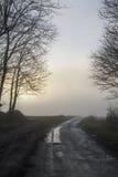 Ήλιος μέσω της ομίχλης και δέντρα το χειμώνα Στοκ Εικόνες