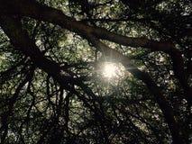 Ήλιος μέσω των δέντρων! Ήρεμα φύσης φύλλα φωτός του ήλιου φωτογραφίας όμορφα Στοκ Εικόνες