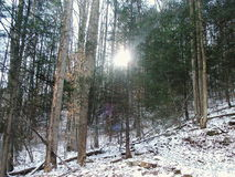 Ήλιος μέσω των δέντρων Στοκ Εικόνες