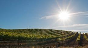 Ήλιος ξημερωμάτων που λάμπει στους αμπελώνες Paso Robles στην κεντρική κοιλάδα Καλιφόρνιας ΗΠΑ Στοκ Εικόνες