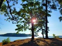 Ήλιος που λάμπει μέσω ενός δέντρου στοκ εικόνα με δικαίωμα ελεύθερης χρήσης