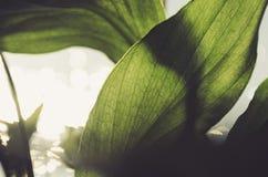 Ήλιος που λάμπει μέσω ενός φύλλου στοκ φωτογραφία με δικαίωμα ελεύθερης χρήσης