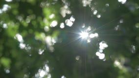 Ήλιος που λάμπει μέσω των φύλλων που φυσούν στο υπόβαθρο αερακιού 4k απόθεμα βίντεο