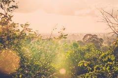 Ήλιος που λάμπει στην πράσινη ζούγκλα Στοκ εικόνα με δικαίωμα ελεύθερης χρήσης