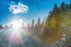 Ήλιος που αυξάνεται από το βουνό με το δάσος Στοκ φωτογραφίες με δικαίωμα ελεύθερης χρήσης