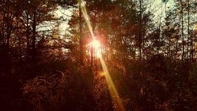 Ήλιος που τίθεται στα ξύλα Στοκ Φωτογραφίες