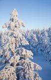 Ήλιος που τίθεται στο χιονισμένο δάσος Στοκ εικόνα με δικαίωμα ελεύθερης χρήσης