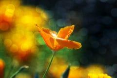 Ήλιος που φιλιέται Στοκ Φωτογραφίες