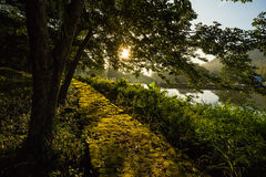 Ήλιος πρωινού στο δάσος στοκ εικόνα