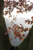 Ήλιος πρωινού το φθινόπωρο Στοκ φωτογραφία με δικαίωμα ελεύθερης χρήσης