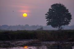Ήλιος πρωινού Στοκ Φωτογραφίες
