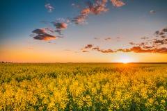 Ήλιος στην ανατολή ηλιοβασιλέματος πέρα από τον ορίζοντα της άνοιξης που ανθίζει Canola, Ρ Στοκ φωτογραφία με δικαίωμα ελεύθερης χρήσης