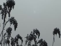 Ήλιος στην ομίχλη απόθεμα βίντεο