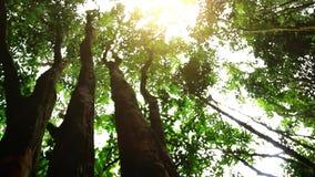 Ήλιος στη βαθιά ζούγκλα δασικό HD 1920x1080 απόθεμα βίντεο