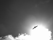 ήλιος στοιχείων σχεδίου Στοκ φωτογραφίες με δικαίωμα ελεύθερης χρήσης