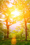 Ήλιος στο δάσος Στοκ εικόνα με δικαίωμα ελεύθερης χρήσης