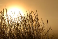 Ήλιος φθινοπώρου Στοκ Φωτογραφίες