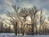 Ήλιος χειμερινού δασικός ουρανού Στοκ εικόνες με δικαίωμα ελεύθερης χρήσης