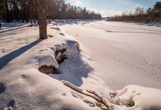 Ήλιος όχθεων ποταμού χειμερινών δασικός ποταμών Στοκ Φωτογραφία
