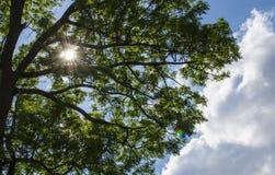 ήλιος Στοκ Εικόνα
