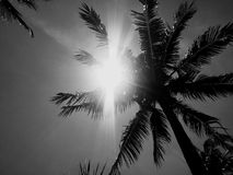 Ήλιος Koh Samui Ταϊλάνδη νησιών παραδείσου φοινίκων Στοκ Φωτογραφίες