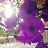 Ήλιος Ray Στοκ φωτογραφίες με δικαίωμα ελεύθερης χρήσης