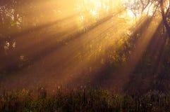 Ήλιων δέντρα και πράσινα ακτίνων λεπτομερή Στοκ Φωτογραφία
