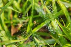 λίγη αράχνη Στοκ φωτογραφίες με δικαίωμα ελεύθερης χρήσης
