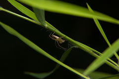 λίγη αράχνη Στοκ εικόνες με δικαίωμα ελεύθερης χρήσης