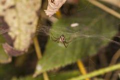 λίγη αράχνη Στοκ Φωτογραφία