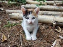 λίγη γάτα γατών Στοκ Φωτογραφίες