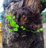 λίγο δέντρο στοκ εικόνες με δικαίωμα ελεύθερης χρήσης