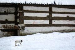 λίγο πρόβατο Στοκ Φωτογραφίες
