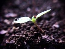 λίγο φυτό Στοκ φωτογραφίες με δικαίωμα ελεύθερης χρήσης