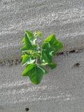 λίγο φυτό Στοκ φωτογραφία με δικαίωμα ελεύθερης χρήσης