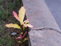 λίγο φυτό Στοκ Εικόνα