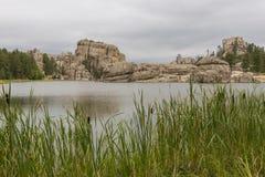 λίμνη δασική Στοκ Εικόνα