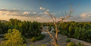 λίμνη αυγής misty Στοκ εικόνα με δικαίωμα ελεύθερης χρήσης