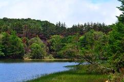 λίμνη και δάσος, Κόστα Ρίκα Στοκ φωτογραφίες με δικαίωμα ελεύθερης χρήσης