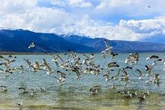 λίμνη Καλιφόρνιας μονο στοκ φωτογραφία με δικαίωμα ελεύθερης χρήσης