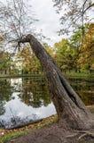 λίμνη πέρα από το δέντρο Στοκ Εικόνες