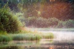 λίμνη misty στοκ εικόνα με δικαίωμα ελεύθερης χρήσης