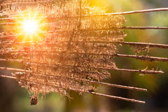 Ίνα καρύδων Στοκ Φωτογραφίες