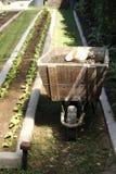 λίπανση ενός πολύ καθαρού κήπου Στοκ Εικόνες