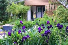 ίριδα κήπων Στοκ φωτογραφία με δικαίωμα ελεύθερης χρήσης