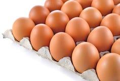 δίσκος εγγράφου αυγών Στοκ Εικόνα