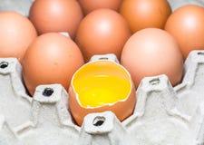 δίσκος εγγράφου αυγών Στοκ Εικόνες