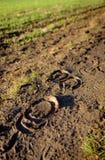 Ίχνη αλόγων που βλέπουν στη μαλακή λάσπη κοντά σε έναν αγροτικό τομέα Στοκ εικόνα με δικαίωμα ελεύθερης χρήσης