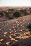 Ίχνη ερήμων στοκ εικόνα